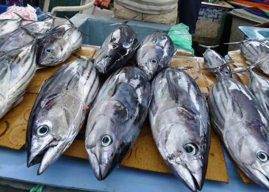 These Two Types Of Tuna Are Carrying More Mercury