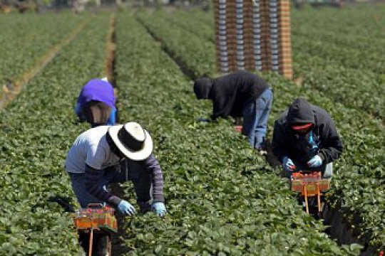 Hoekom Massa Deportasies sal die ekonomie benadeel