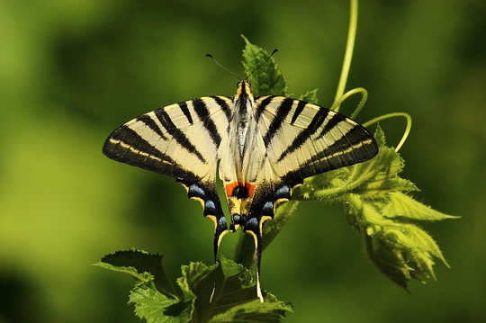 mariposa 1701685 640