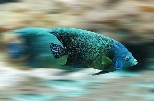 fisk 582695 640