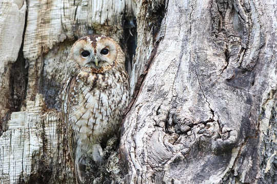 owl camouflage 1576572 640
