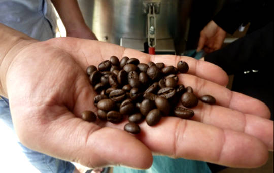 How Used Coffee Beans Can Help Your Health