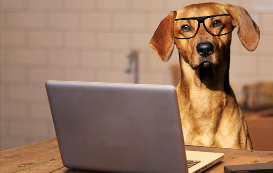 The Growing Demand For Pet-friendly Workplaces