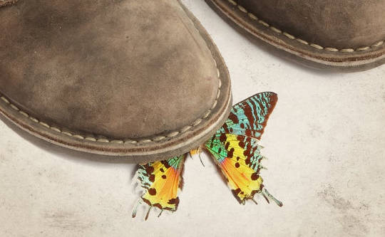 Would Standing On The First Butterfly Really Change The History Of Evolution?