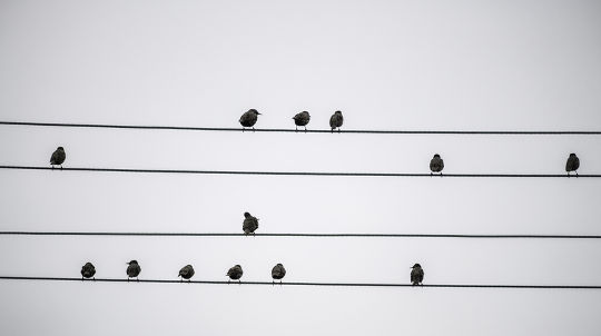 Por qué Birds On A Wire Act Mucho le gusta People in Line