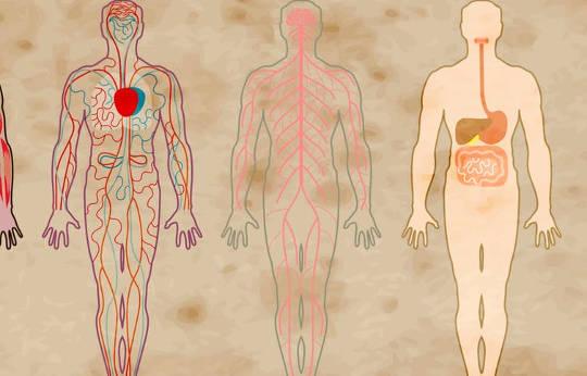 精神分裂症如何影响身体,而不仅仅是大脑