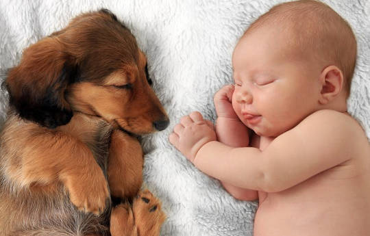 Preparing Your Pet for Your New Baby: A Guide For New Parents