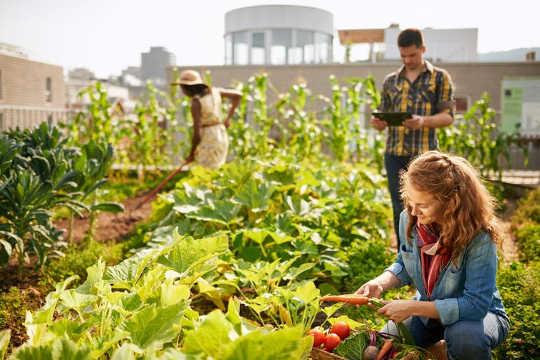 Telhados verdes podem se tornar jardins comunitários.