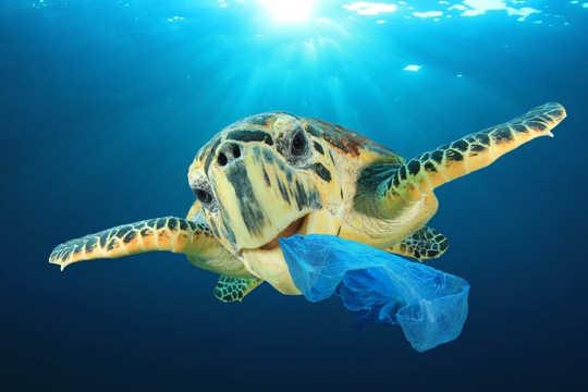 Hoe plastic zakken schadelijk zijn voor onze omgeving en het leven op zee