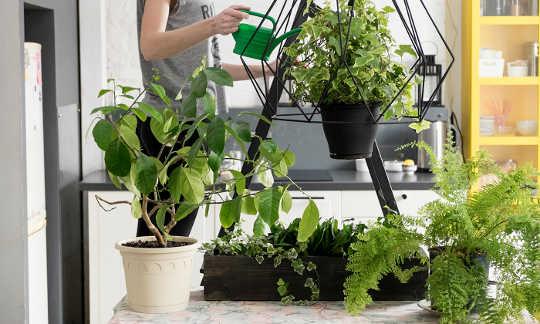 Comment nous sommes guéris par la nature et même les plantes d'intérieur
