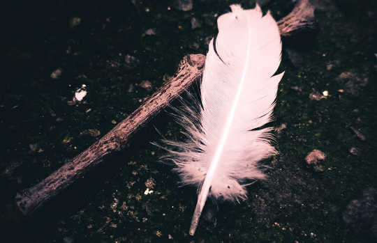 A Feather for Your Dream Journeys Ino Healing