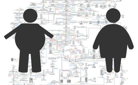 有多种类型的肥胖,哪一个对您的健康有影响?