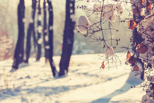 为什么在寒冷的天气中心脏病发作更频繁