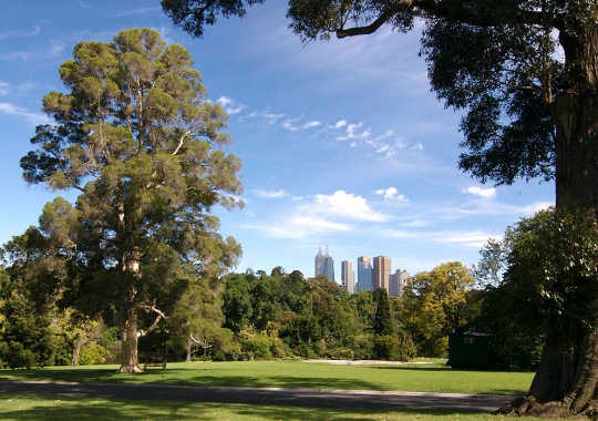 Live in a city? The take time to walk in the city's parks and gardens (Why a walk in the woods really does help your body and your soul)