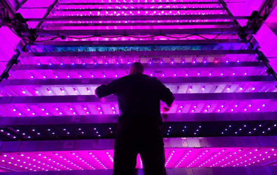 Vertical Farming Sounds Fantastic Until You Consider Its Energy Use