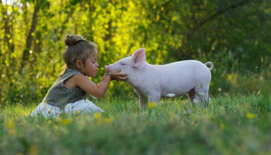 Early childhood experiences can shape how we feel about animals (Why people become vegans: the history sex and science of a meatless existence)