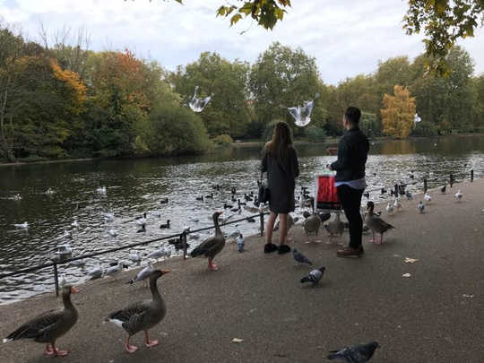 The pigeon paradox: interactions with urban nature in London's Hyde Park (why daily doses of nature in the city matter for people and the planet)