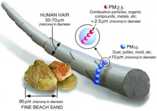The average human hair is about 70 micrometers in diameter – 30 times larger than the largest fine particle. (fine particle air pollution is a public health emergency hiding in plain sight)