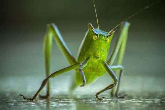 לתקשר עם חרקים כעמיתים חכמים