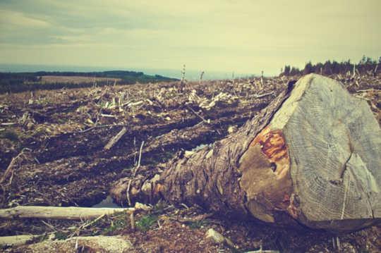 إذا كنا نريد غذائنا لتكون مستدامة حقا ، نحن بحاجة إلى أن نكون قادرين على معرفة من أين يأتي