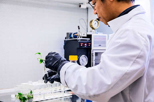 Cette plante d'intérieur aspire de l'air des produits chimiques liés au cancer