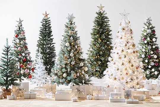 あなたが再利用または堆肥を購入する場合、購入するクリスマスツリーの種類を強調しないでください