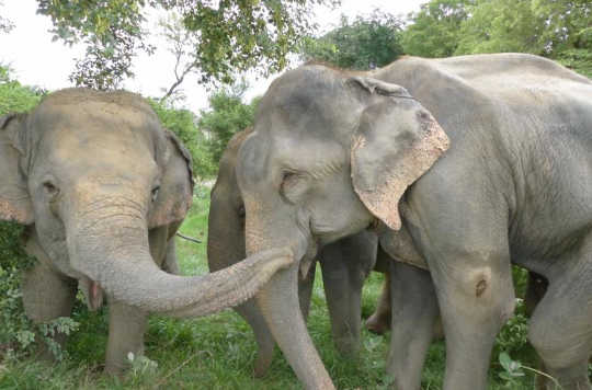 Crying Elephants And Giggling Rats – Animals Have Feelings, Too