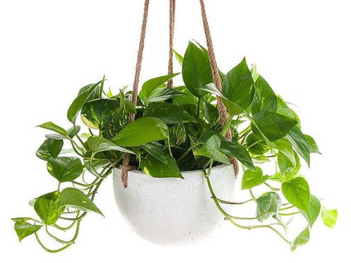 Use these plants to fight indoor pollution for Pollution fighting plants