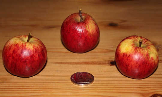 How Forensic Science Has Helped Rediscover Forgotten Apples