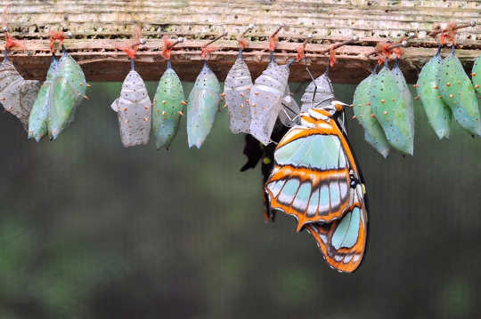 Do Butterflies Remember Being Caterpillars?