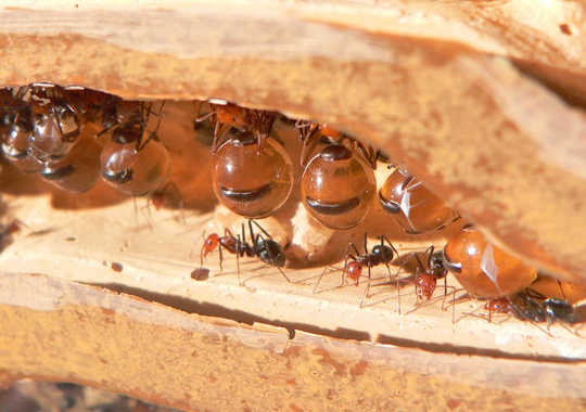 Wasps, Aphids And Ants And The Other Honey Makers