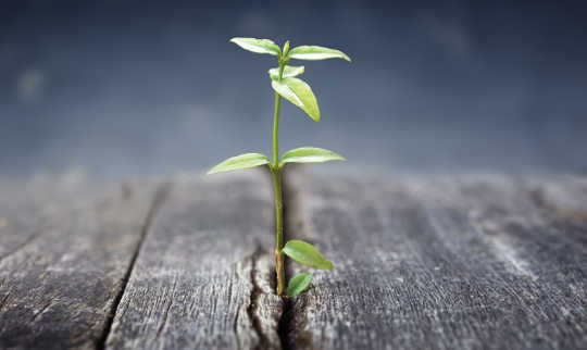 Do Parental Jobs Predict How Far You Get In Life