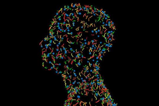 Conheça os trilhões de vírus que compõem seu vírus