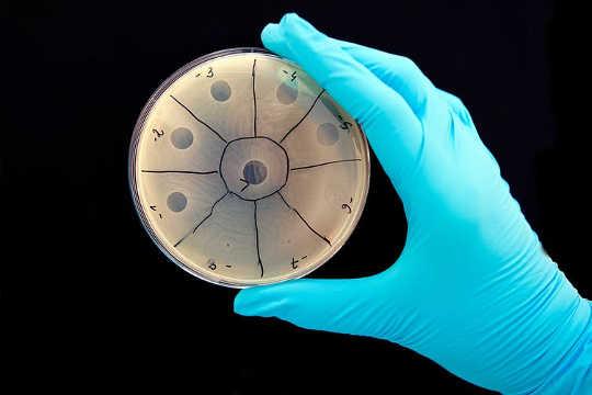 conheça suas bactérias13 20