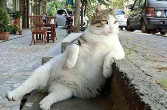 왜 우리 애완 동물의 과체중이 그렇게 많습니까?