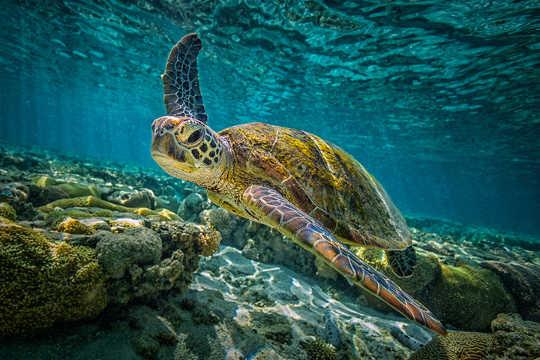 杀死一只乌龟需要多少塑料?