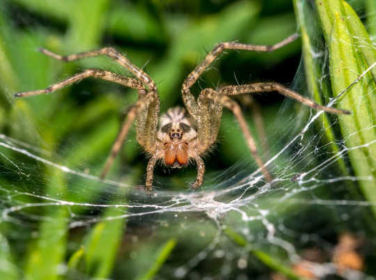 Spiders Scare Me, But I Also Find Them Fascinating