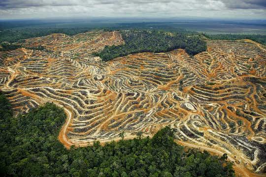 Bagaimana Permintaan Minyak Sawit Berkelanjutan Menghancurkan Hutan