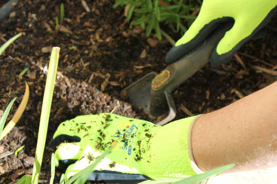 5 Reasons You Should Wear Gardening Gloves