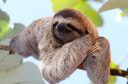 On The Virtues Of Sleeping Like A Sloth