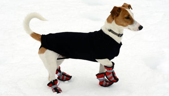 Pets are often suited up with protection from the cold. (is winter miserable for wildlife)