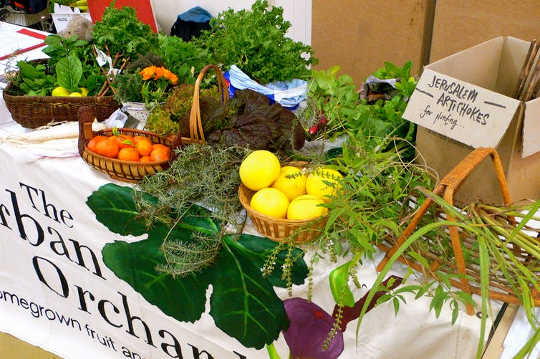 Let's Reap The Economic Benefits Of Local Food Over Big Farming