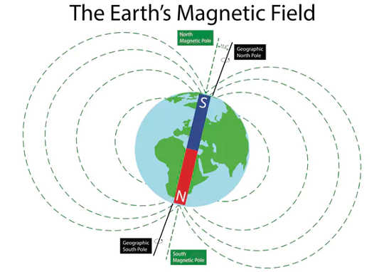 Life on Earth is exposed to the planet's ever-present geomagnetic field (do you have a magnetic compass in your head?)