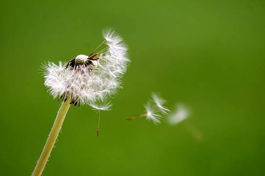 Vivendo impecavelmente: este momento presente é nosso presente para o eu universal