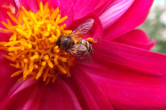 A Painful Lesson In Zen And The Art Of Honeybee Reverence