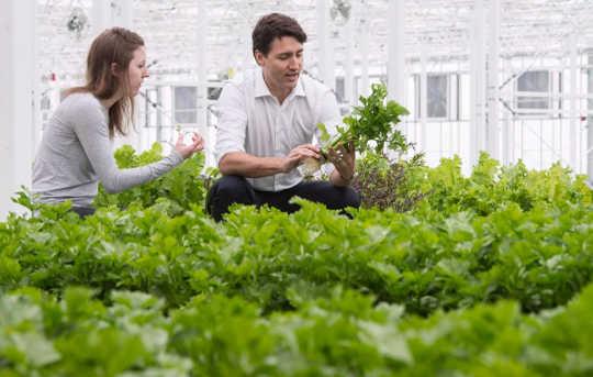 Maneras amigables de presupuesto para obtener su solución vegetariana a medida que los precios aumentan