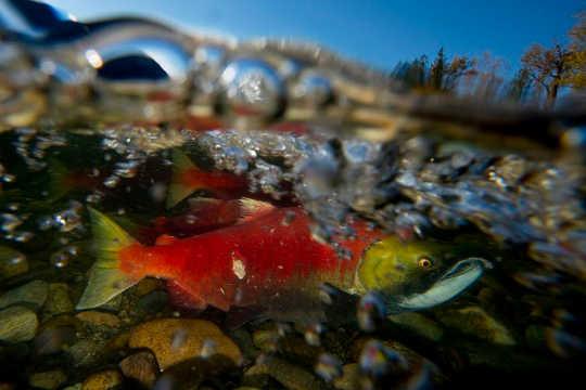 Por que a vida selvagem de água doce enfrenta um futuro incerto