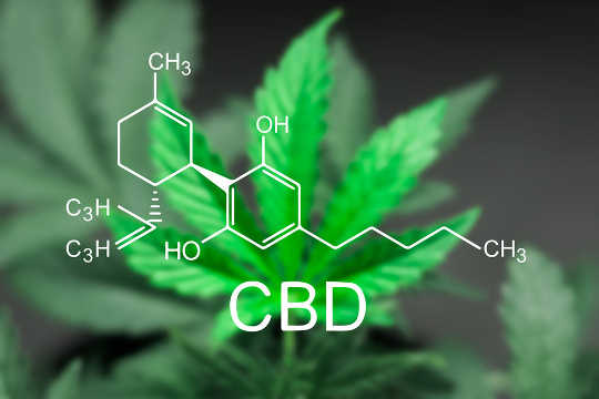 Cannabis Compounds Have Been Shown To Slow Colon Cancer In The Lab