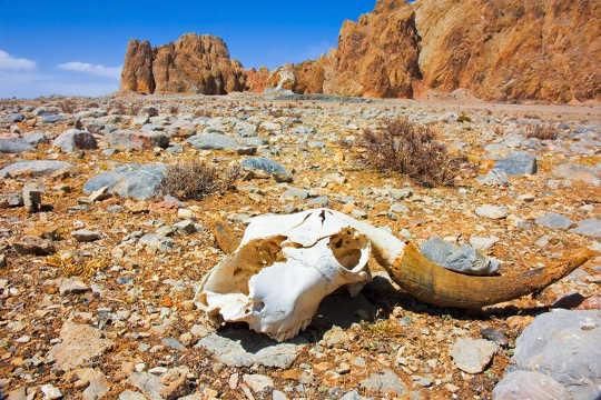 El efecto de un clima de calentamiento en el esperma podría ser clave para la extinción de las especies