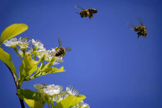 What Smart Bees Can Teach Humans About Collective Intelligence